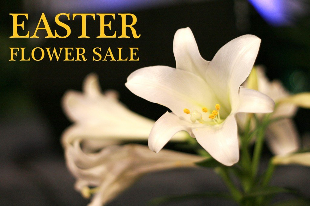 EASTER FLOWER SALE TODAY